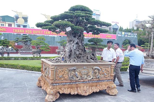 Mua cây sanh cổ quá cao, cắt làm đôi tạo thành 2 cây bán gần 20 tỷ đồng - 2