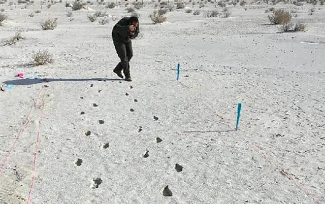 """Kỹ thuật radar mới giúp """"mở khoá"""" bí ẩn dấu chân hóa thạch có từ thời Kỷ băng hà - 1"""