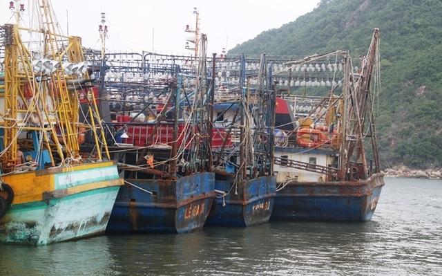 """Tàu cá hàng chục tỷ đồng phải """"đắp chiếu"""", ngư dân lao đao, chính quyền sốt ruột! - 1"""