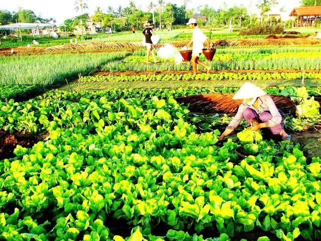 Liên kết phát triển du lịch nông thôn ở Vùng kinh tế trọng điểm miền Trung