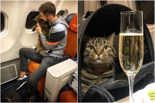 Hành khách lén đưa mèo lên máy bay, còn chụp ảnh khoe chiến tích - 1
