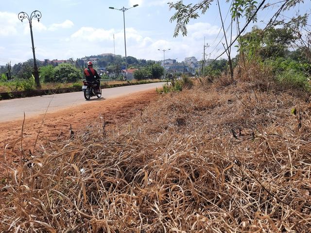 Dân kinh hãi trước cảnh dọn dẹp đường bằng... thuốc diệt cỏ - 1