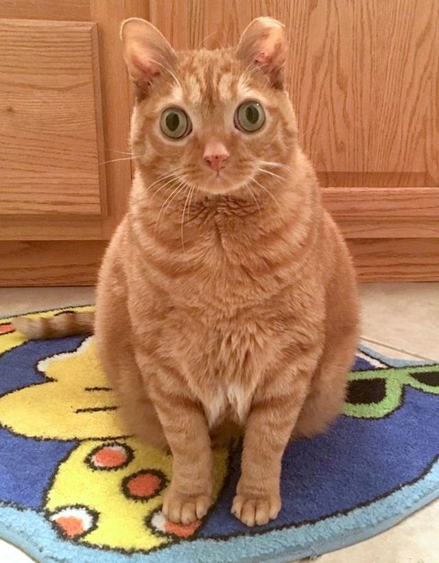 """Chú mèo có đôi mắt to đến """"kinh ngạc"""" - 1"""