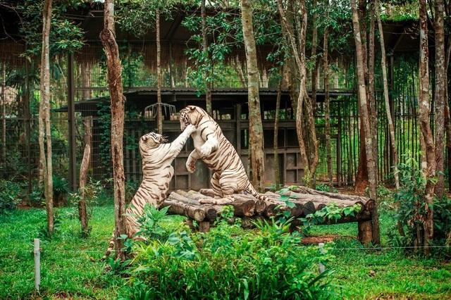 Hội nghị Bảo tồn và Phúc trạng động vật lớn nhất Đông Nam Á - 4
