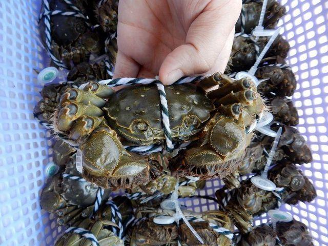 Ăn 1 con cua lạ giá 1 chỉ vàng, ngả mũ chơi sang của nhà giàu Việt - 7