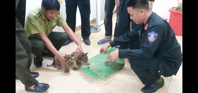 Giải cứu 2 cá thể hổ con được đựng trong túi nhựa - 2