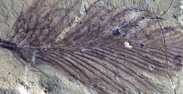 Phát hiện cách khủng long tồn tại với sự khắc nghiệt ở siêu lục địa Gondwana cổ đại - 1