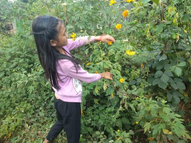 Học sinh vùng cao tặng hoa rừng, cá suối tri ân thầy cô ngày 20/11 - 5
