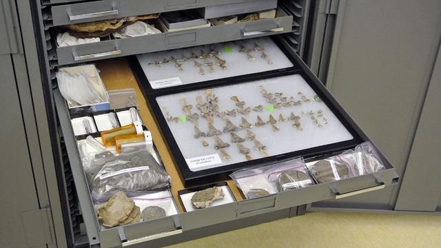 Phát hiện hoá thạch loài cá mập khổng lồ 91 triệu năm tuổi chưa từng được biết đến - 1