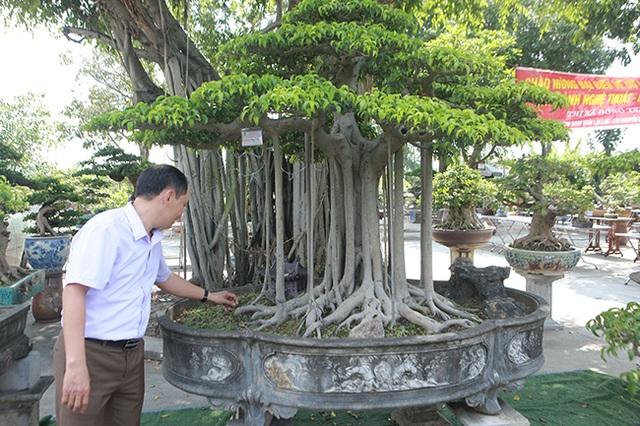 """Chiêm ngưỡng """"chùa Đồng"""" dưới bóng cây sanh tiền tỷ - 2"""