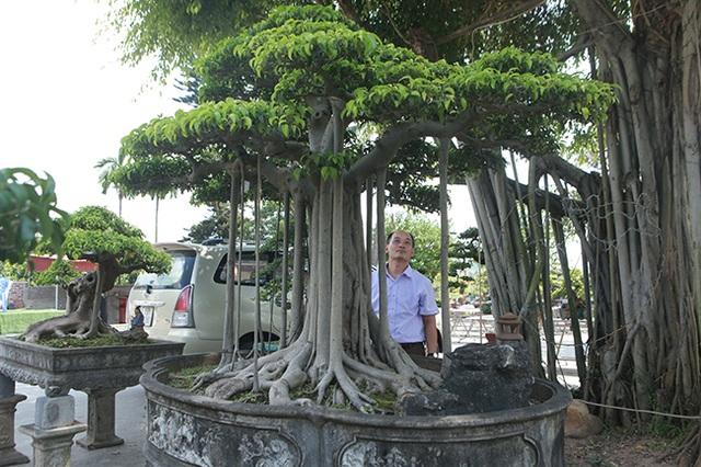"""Chiêm ngưỡng """"chùa Đồng"""" dưới bóng cây sanh tiền tỷ - 3"""