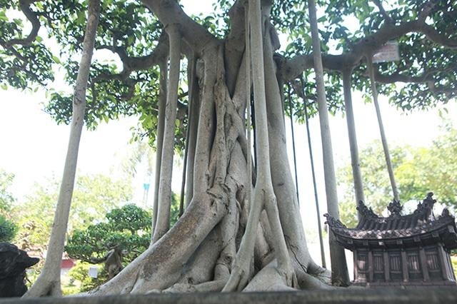 """Chiêm ngưỡng """"chùa Đồng"""" dưới bóng cây sanh tiền tỷ - 4"""