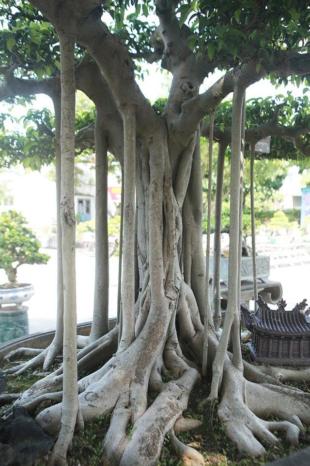 """Chiêm ngưỡng """"chùa Đồng"""" dưới bóng cây sanh tiền tỷ - 9"""