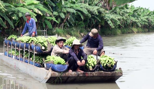 Cần Thơ: Nông trường Sông Hậu sẽ thành Công ty TNHH 2 thành viên - 1