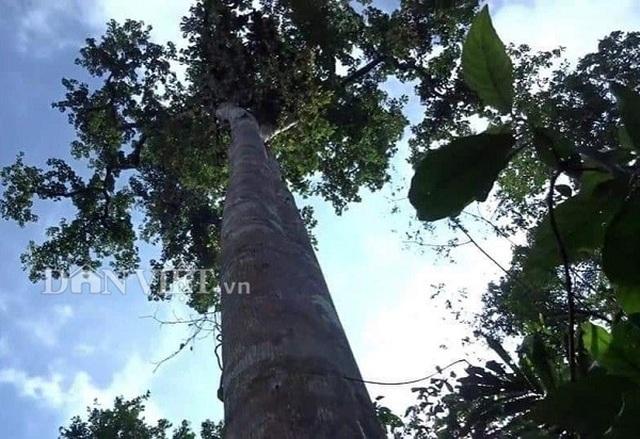 Tay săn đặc sản nhộng ong rừng cừ khôi: Nghề nguy hiểm hái ra tiền - 2