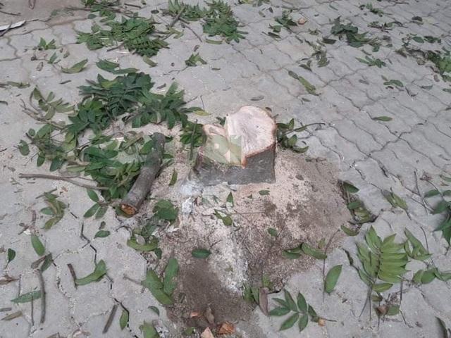 Hà Nội: Truy tìm các đối tượng chặt hạ cây xanh trong đêm - 2