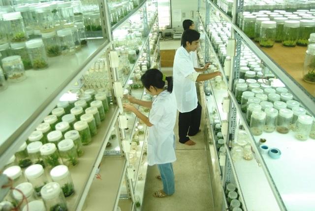 Đào tạo nhân lực cho ngành nông nghiệp công nghệ cao - 1