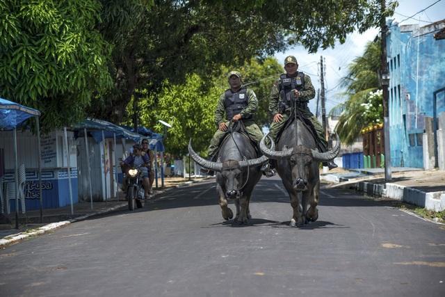 Cảnh sát cưỡi... trâu nước nặng 450 kg đi tuần tra - 2