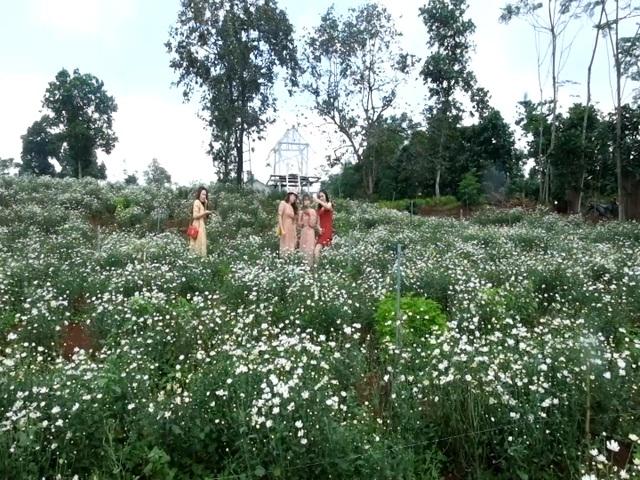 """Du khách thích thú trải nghiệm vẻ đẹp vườn cúc họa mi trên vùng """"đất lửa""""! - 4"""