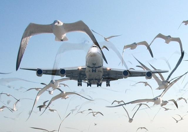 Vì sao hầu hết máy bay thương mại đều sơn màu trắng? - 4