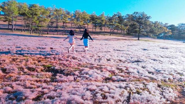 Tháng 11 về, lạc vào cánh đồng cỏ hồng đẹp như xứ sở thần tiên ở Đà Lạt - 5