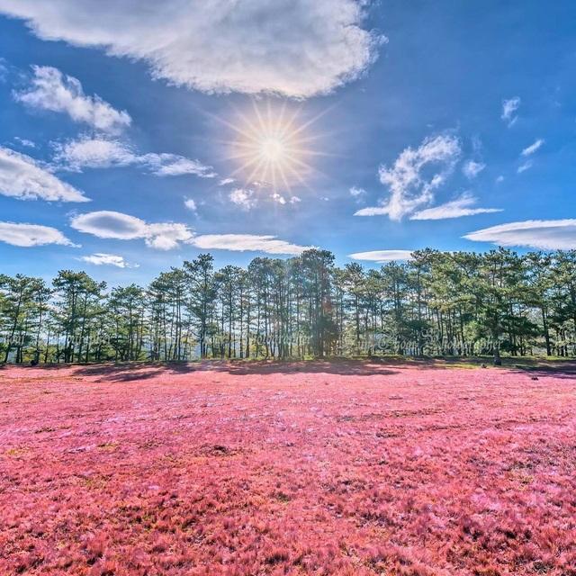 Tháng 11 về, lạc vào cánh đồng cỏ hồng đẹp như xứ sở thần tiên ở Đà Lạt - 2