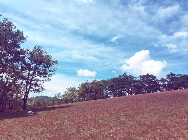 Tháng 11 về, lạc vào cánh đồng cỏ hồng đẹp như xứ sở thần tiên ở Đà Lạt - 6