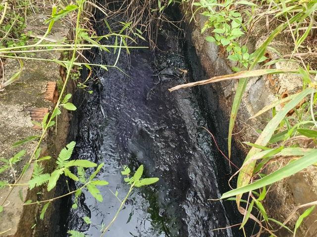 Công ty chế biến nông sản xả nước hôi thối, đen đặc quánh - 1