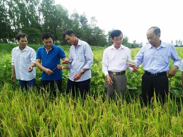 An Giang: Ngành lúa gạo và thủy sản An Giang đạt kết quả nổi bật nhờ ứng dụng công nghệ cao - 2