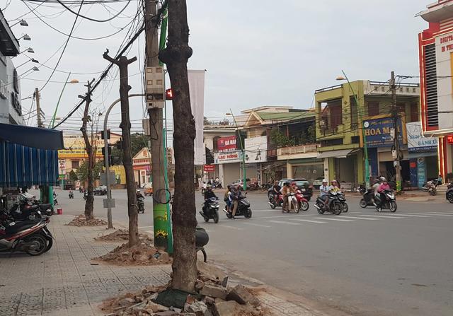 Chi gần 3 tỉ đồng thay thế cây xanh ở trung tâm thành phố Đông Hà - 2