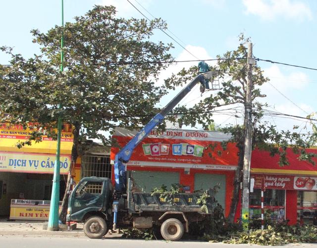 Chi gần 3 tỉ đồng thay thế cây xanh ở trung tâm thành phố Đông Hà - 4