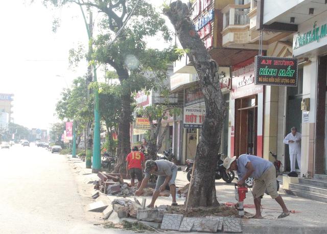 Chi gần 3 tỉ đồng thay thế cây xanh ở trung tâm thành phố Đông Hà - 1