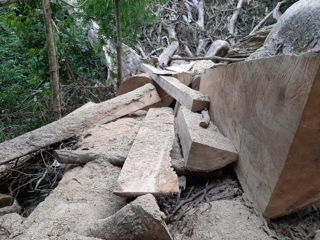 Xem xét xử lý nghiêm vụ phá rừng đặc dụng Nam Ka - 2