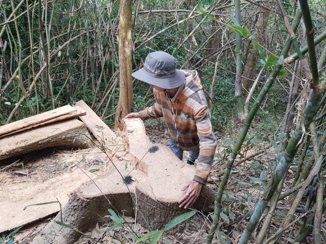 Xem xét xử lý nghiêm vụ phá rừng đặc dụng Nam Ka - 1