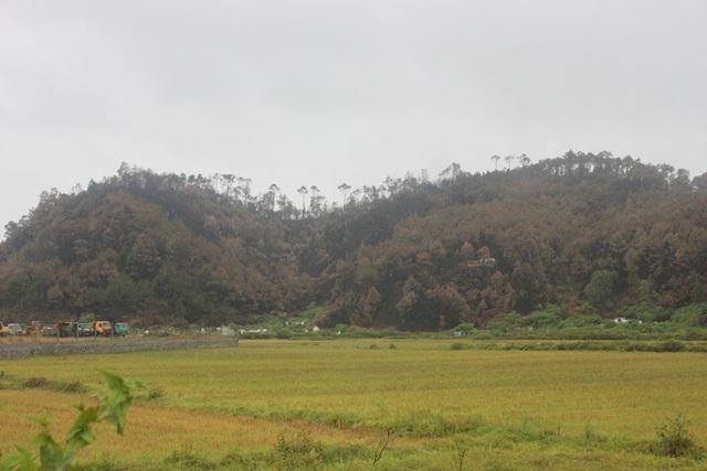 Đề xuất trồng lại hơn 50ha rừng sau vụ cháy núi Hồng Lĩnh - 3