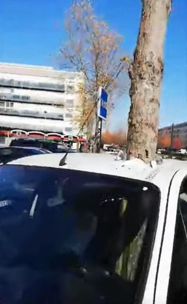 Bí ẩn cây sừng sững đâm xuyên nóc xe ô tô - 1