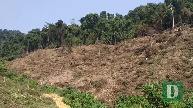 Nhiều nhân viên bảo vệ rừng bỏ việc vì nghề nguy hiểm, lương không đủ sống - 5