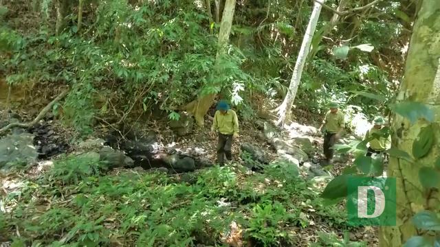 Nhiều nhân viên bảo vệ rừng bỏ việc vì nghề nguy hiểm, lương không đủ sống - 8