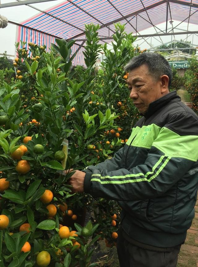 Nhiều làng hoa ở Hà Nội sẵn sàng cho vụ Tết Nguyên đán - 1