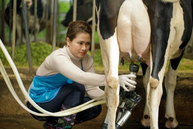 Cô Gái Hà Lan: Câu chuyện về 20 phút vàng và nguồn sữa tươi nguyên liệu an toàn hàng đầu Việt Nam - 1