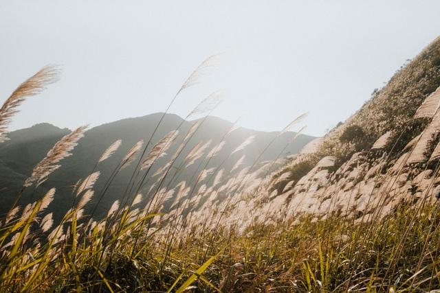 """Giới trẻ rủ nhau """"sống ảo"""" trên ngọn đồi lau mới nổi ngay gần Hà Nội - 2"""