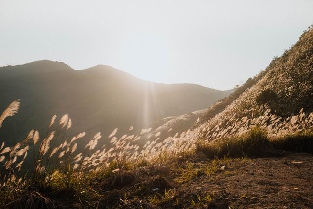 """Giới trẻ rủ nhau """"sống ảo"""" trên ngọn đồi lau mới nổi ngay gần Hà Nội - 7"""