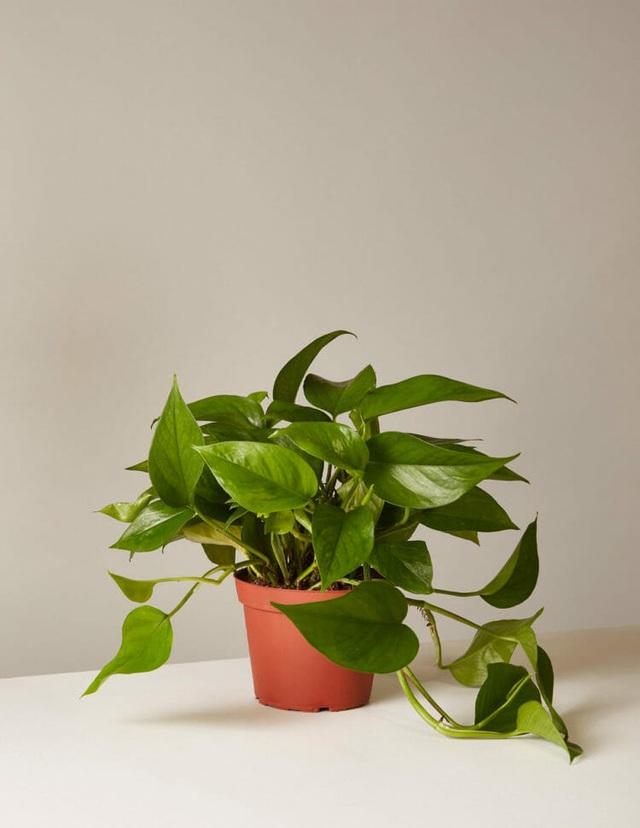 """5 loại cây phong thủy trong nhà vừa """"hút"""" tài lộc, vừa mang đến lợi ích bất ngờ cho sức khỏe - 2"""