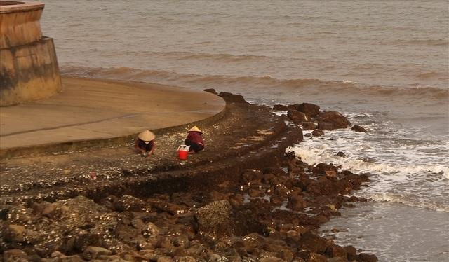 Độc đáo nghề gõ hà biển ở Đồ Sơn - 11