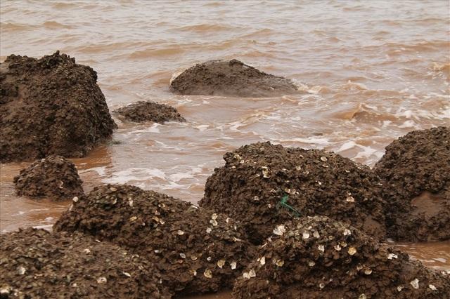 Độc đáo nghề gõ hà biển ở Đồ Sơn - 2