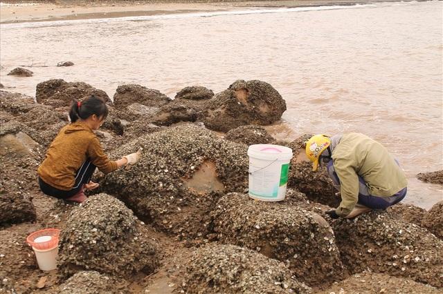Độc đáo nghề gõ hà biển ở Đồ Sơn - 3