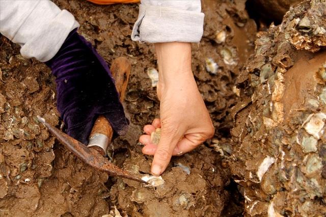 Độc đáo nghề gõ hà biển ở Đồ Sơn - 4
