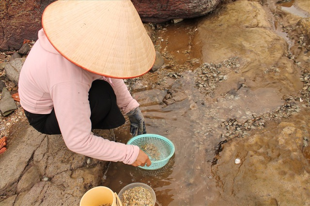 Độc đáo nghề gõ hà biển ở Đồ Sơn - 9