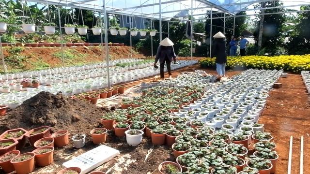 Trồng hơn 8.000 chậu hoa, đôi vợ chồng trẻ kỳ vọng kiếm trăm triệu đồng dịp Tết  - 5