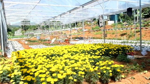 Trồng hơn 8.000 chậu hoa, đôi vợ chồng trẻ kỳ vọng kiếm trăm triệu đồng dịp Tết  - 8